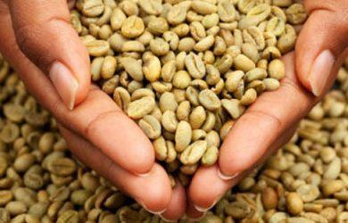 graos-cafe-verde-emagrece